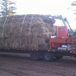 Huge Amount of Straw Used in Seeding