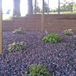 Planting Under the Shaded Deck - Will Fill Out Beautifully in Time